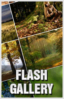Over 38 Free Flash Photo Gallery Ready to Use for your images image